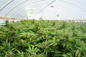 Thinking of starting a cannabis business in Maine?